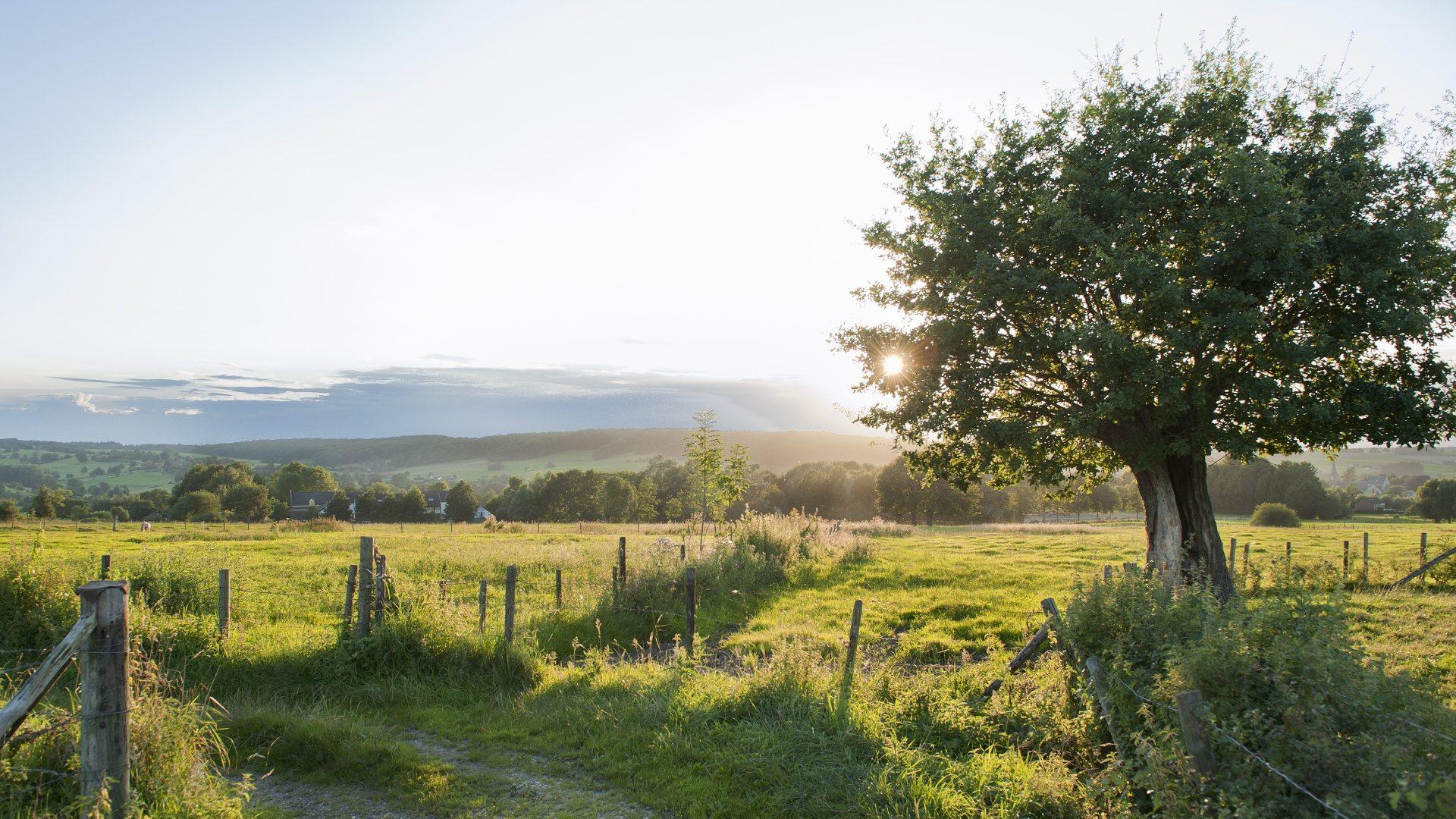 Te midden van de natuur - Slenaker Vallei